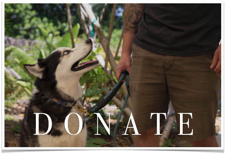 Donate to K9 Program